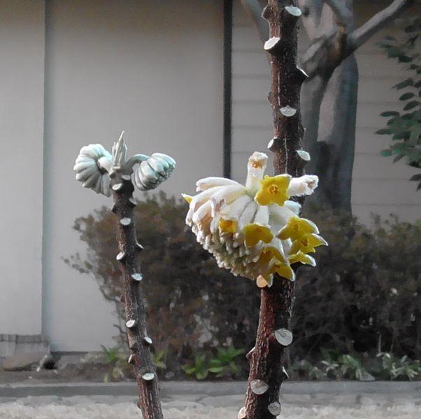 20200212_mitsumata_01.jpg