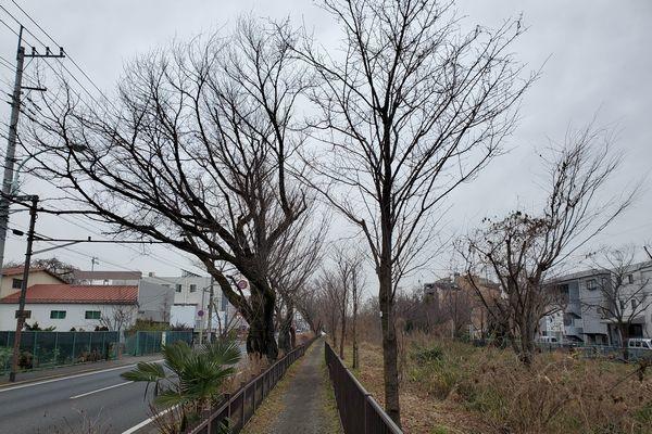 20200227_josui-walk_26.jpg