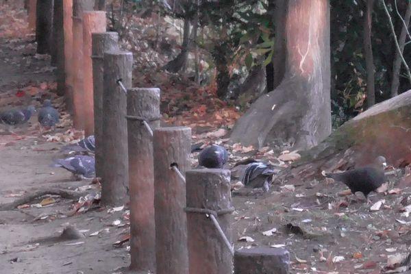 20201116_tamagawa-josui_04.jpg