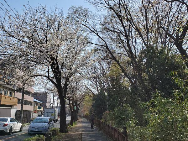 20210324_koganei_01.jpg