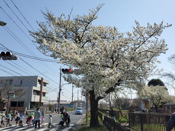 20210324_koganei_03.jpg