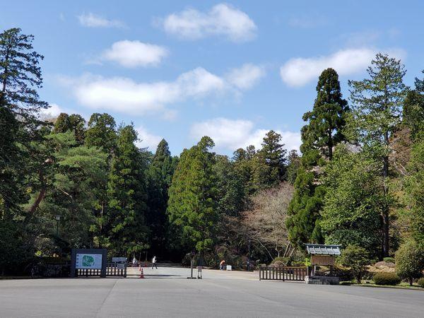 20210329_sakura_03.jpg