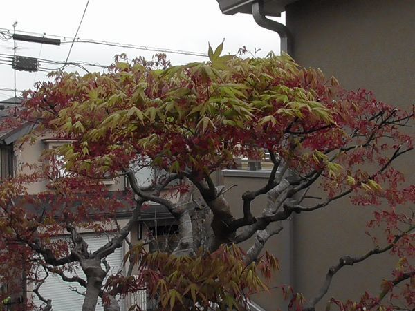 20210330_kokubunji_01.jpg