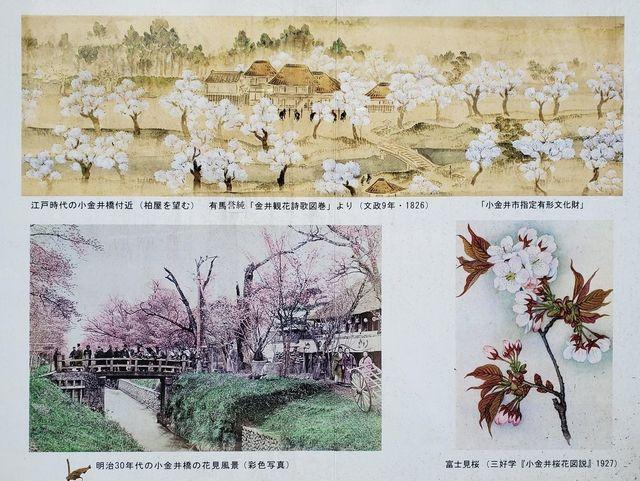 sakura-photo.jpg